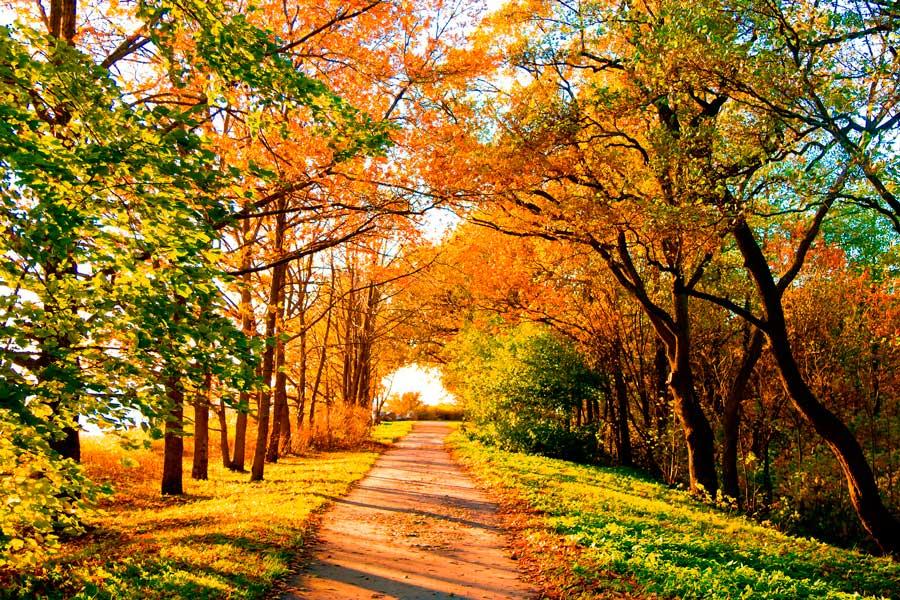 Осень Бабье лето