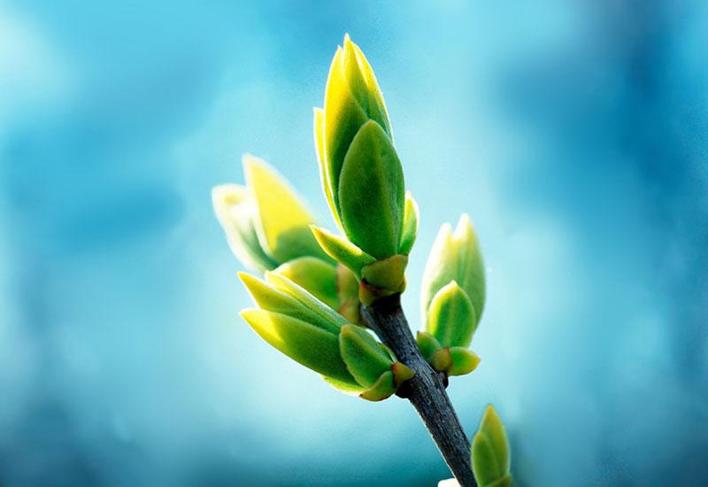 Природа, росток
