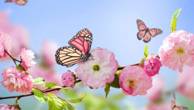 Бабочка, весна